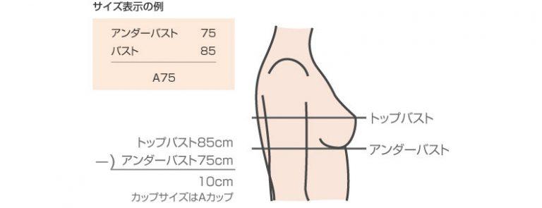 ■間違ったままのブラをつけてる?正しいサイズを確認