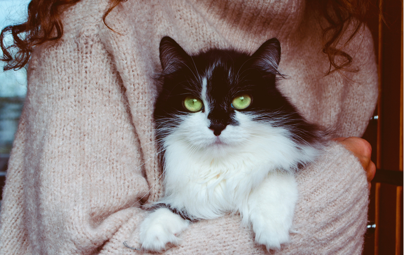 都内 猫カフェ 人気 おすすめ 店の選び方 遊び方 コツ ポイント 注意点
