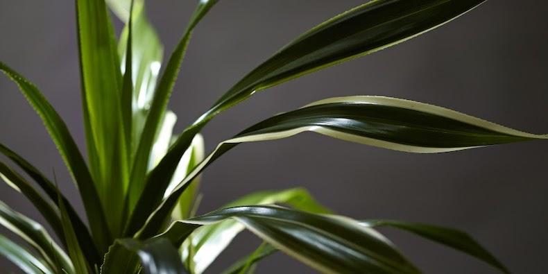 観葉植物は見て触って、葉の質感から選んで