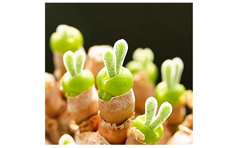 おうち時間 野菜 植物 育てる 栽培キット インテリア 趣味 自由研究 モニラリア