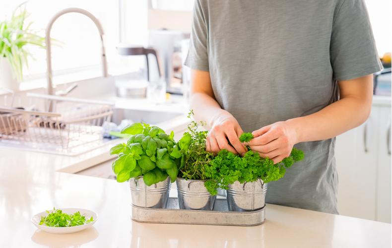 おうち時間 野菜 植物 育てる 栽培キット インテリア 趣味 自由研究 キッチンサイド