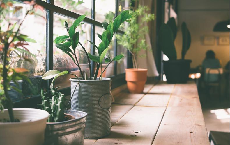 おうち時間 野菜 植物 育てる 栽培キット インテリア 趣味 自由研究