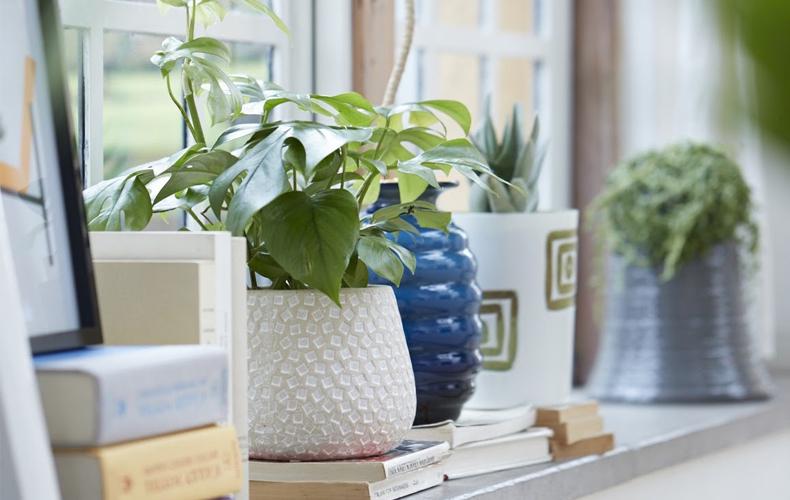 鉢(プランター)次第で植物の魅力が倍増!