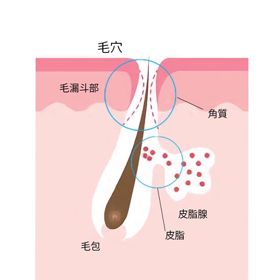 ■ターンオーバーを乱すと角栓を作る原因にも