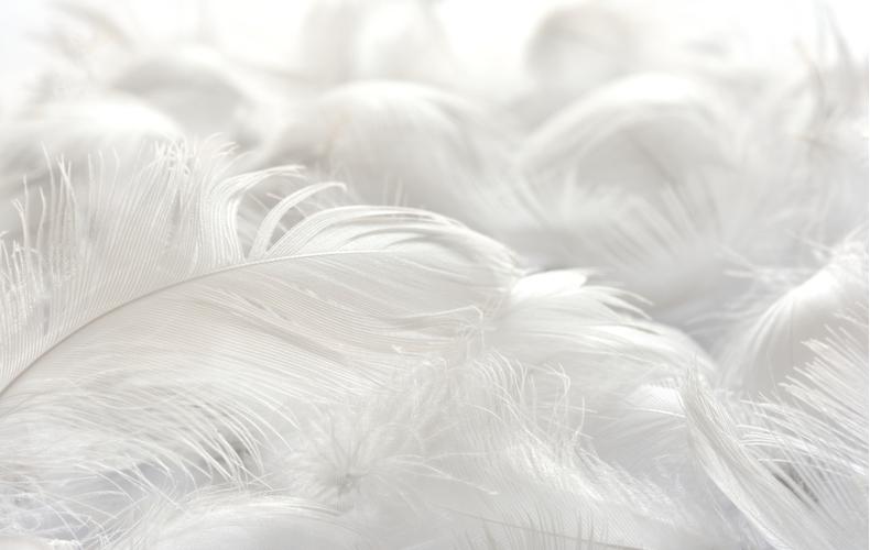 羽毛布団 おすすめ 種類 選び方 ポイント お手入れ方法 機能性羽毛布団 高級羽毛布団