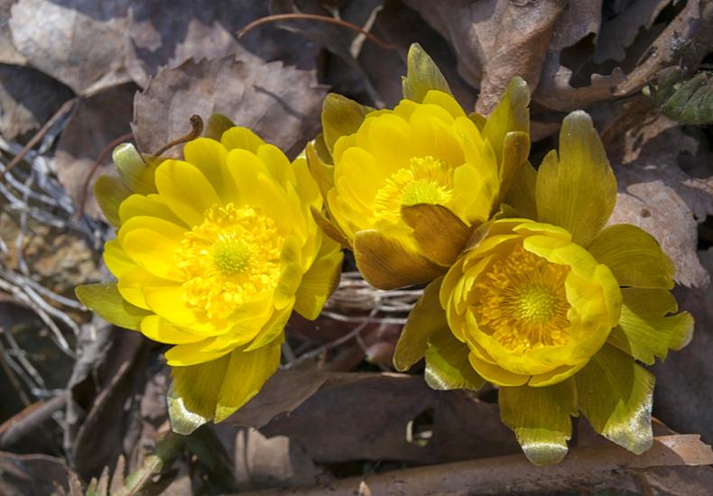 立春 意味 春分 旧正月 違い 節分 食べ物