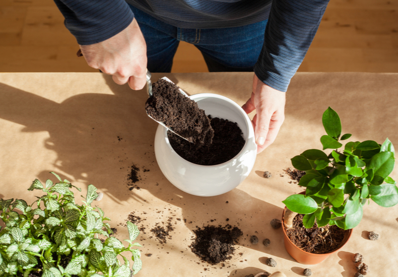 観葉植物 土