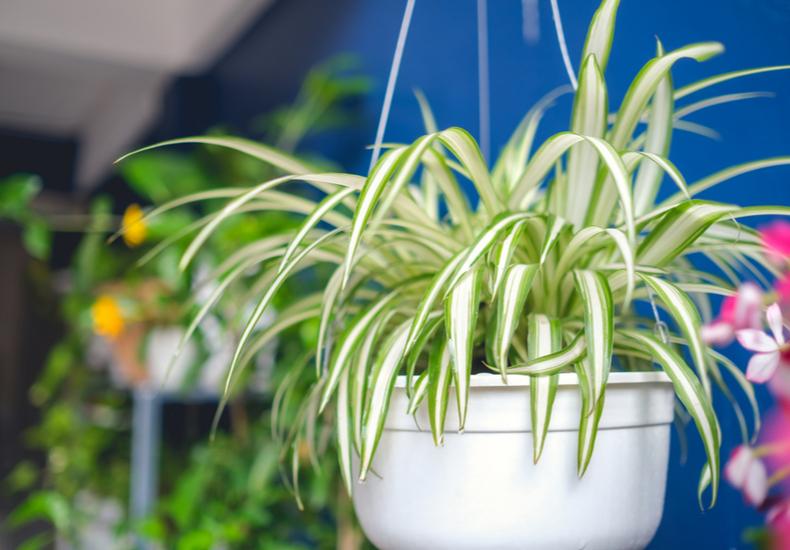 玄関 観葉植物
