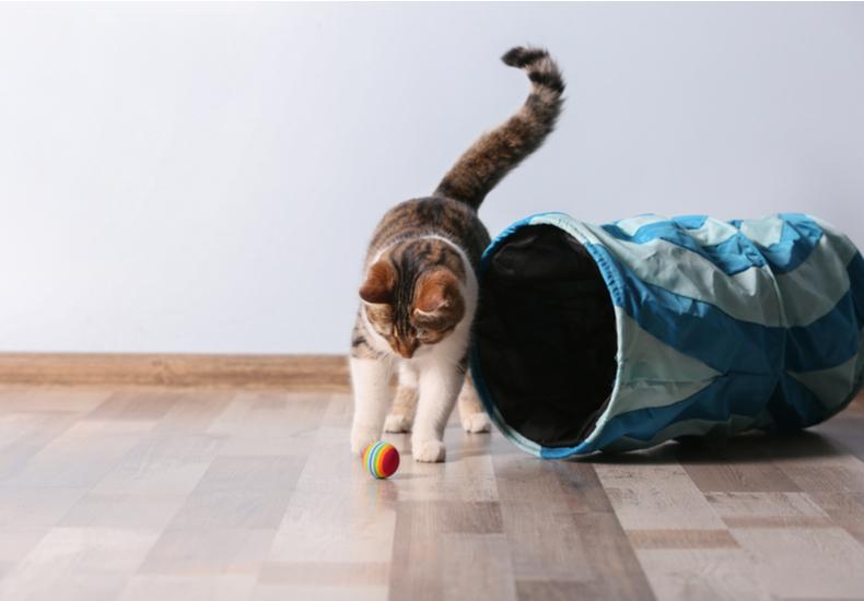 猫用おもちゃのおすすめ猫用おもちゃねこ選ぶ方ポイントコツ定番自動人気外出先電動運動不足解消光るタイプ子猫成猫シニア猫飽きない猫の