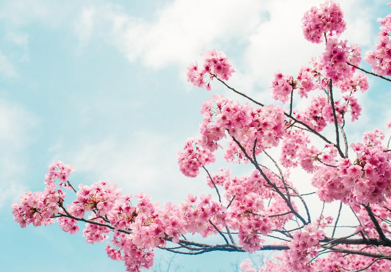 お花見 デート