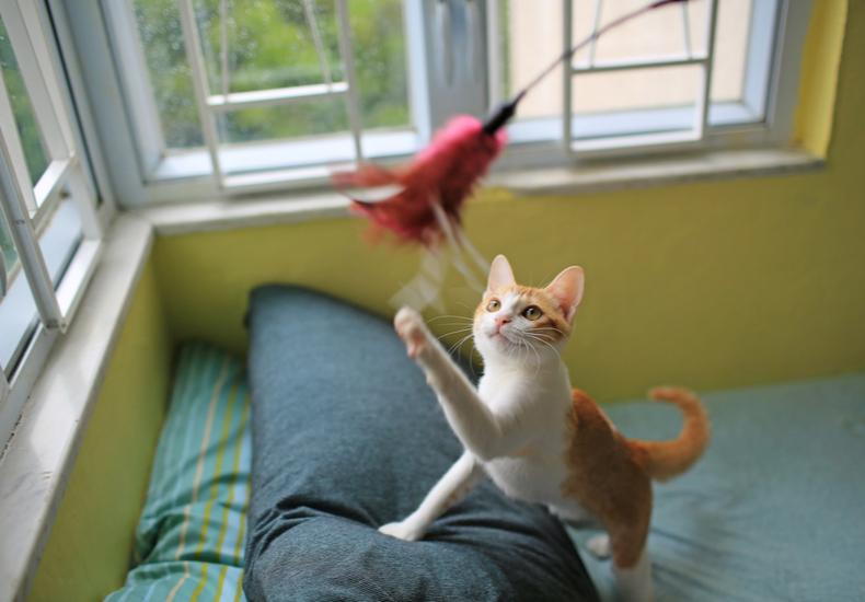 猫用おもちゃのおすすめ猫用おもちゃねこ選ぶ方ポイントコツ定番自動人気外出先電動運動不足解消光るタイプ子猫成猫シニア猫飽きない
