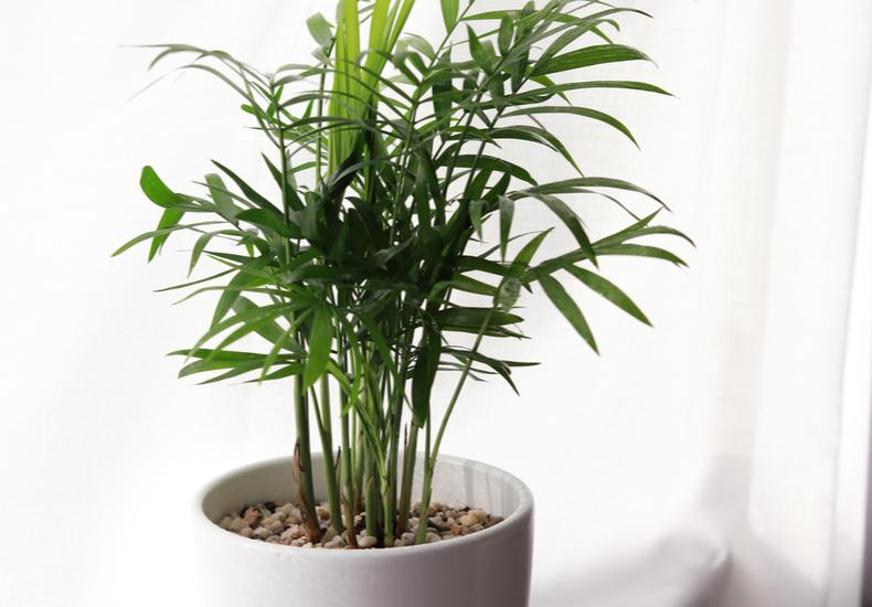 観葉植物 おすすめ