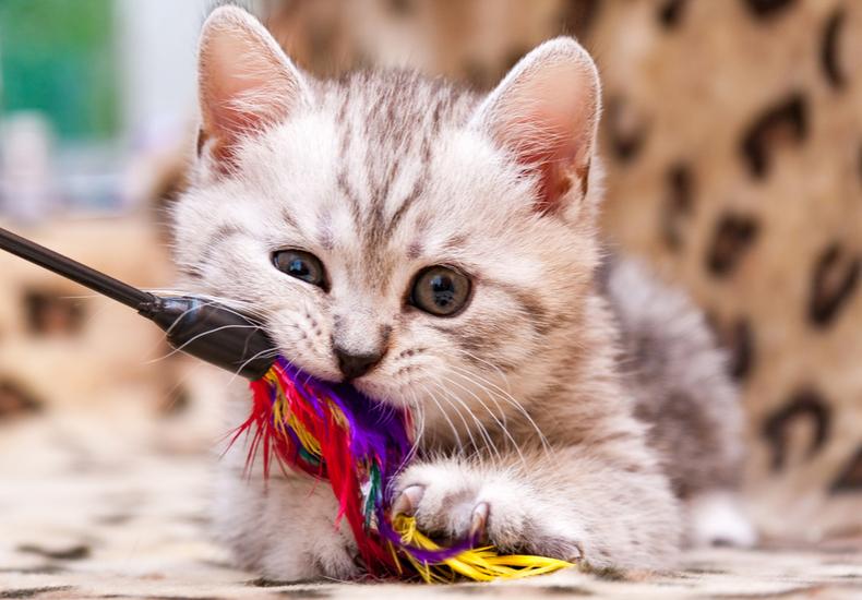 猫 おもちゃ 猫じゃらし 定番
