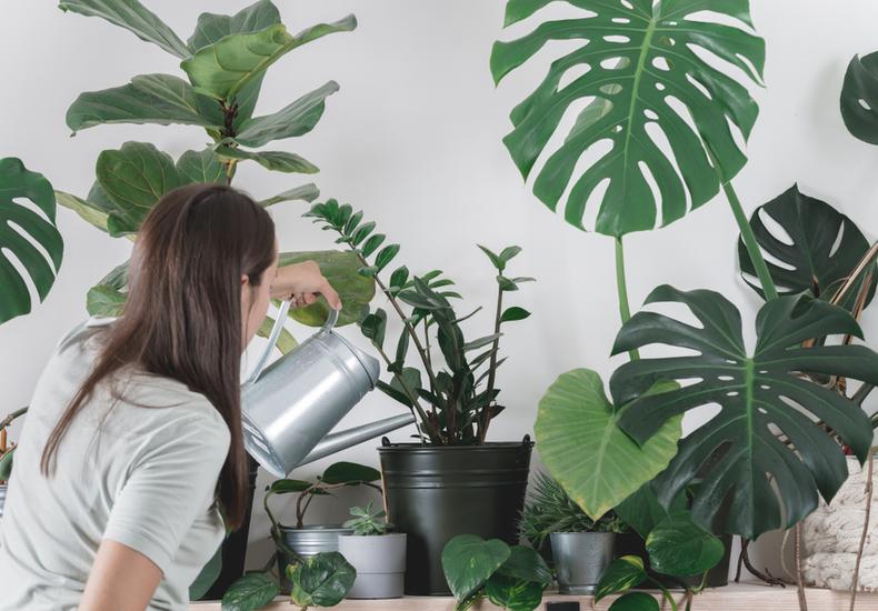 観葉植物 おしゃれ 選び方