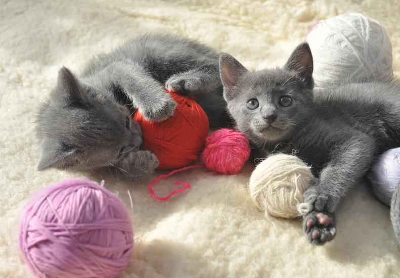 猫 おもちゃ ボール