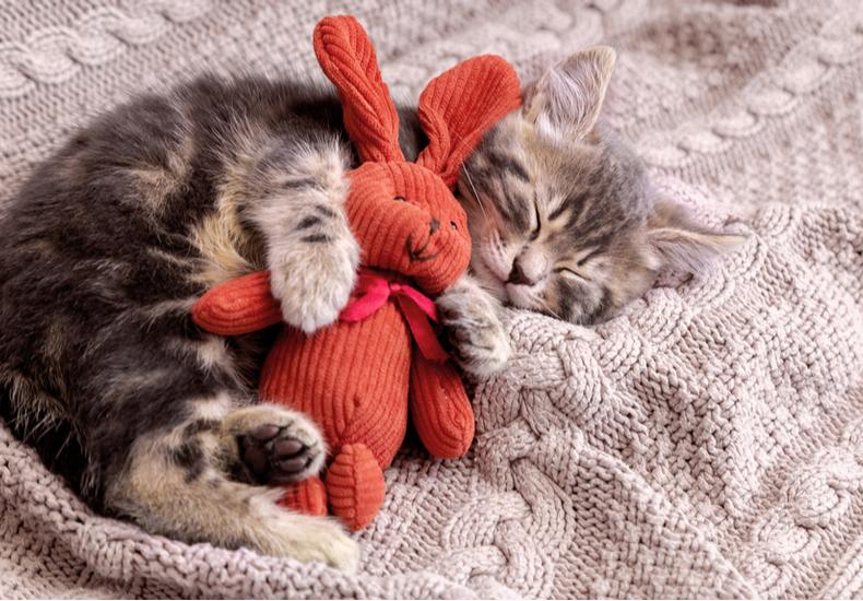 猫 おもちゃ ストレス解消