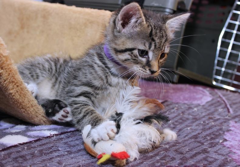 猫 おもちゃ 自動 電動