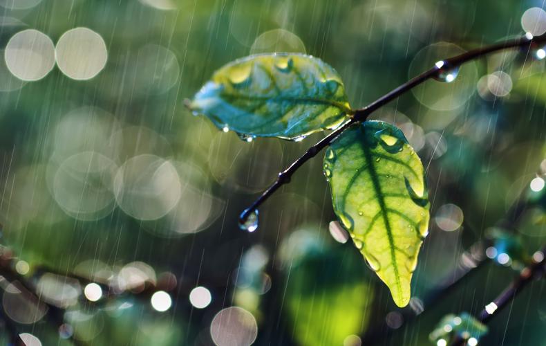 梅雨 意味