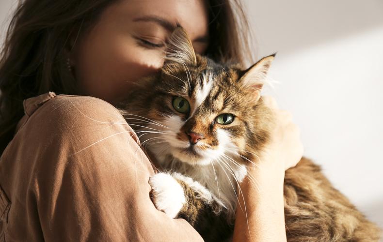 ネコ好き 猫