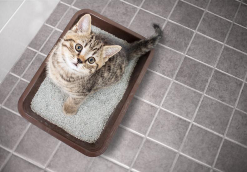 猫砂 おすすめ 種類 鉱物