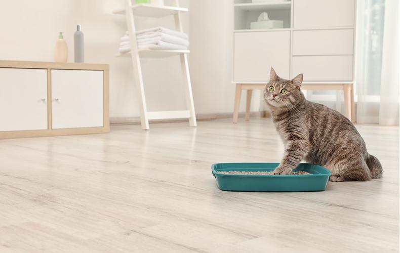 猫砂 おすすめ 種類