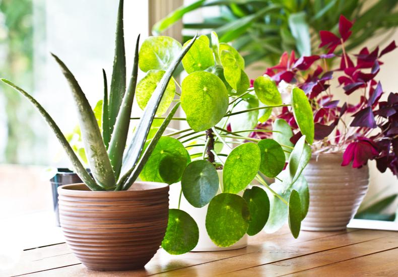加湿 方法 おすすめ グッズ 観葉植物