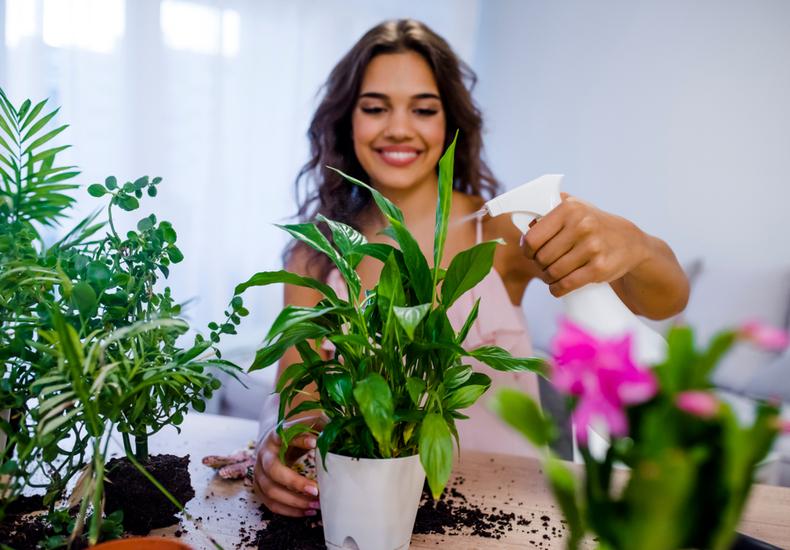 トイレ 観葉植物 おすすめ お手入れ  ほこり 軍手 水やり