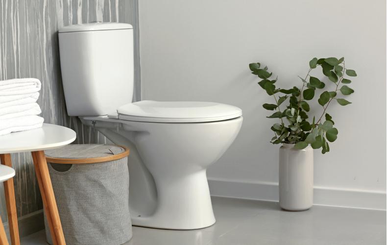 トイレ 観葉植物 おすすめ 効果 メリット