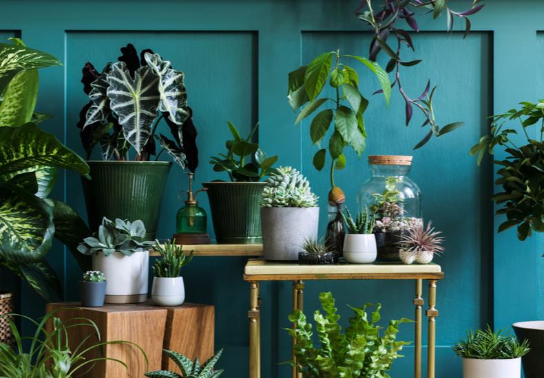 トイレ 観葉植物 おすすめ