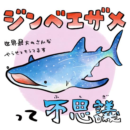 さかなのおにいさん かわちゃん さかな ジンベエザメについて ジンベエザメの生態 ジンベエザメ ツッコミたくなるおさかな図鑑