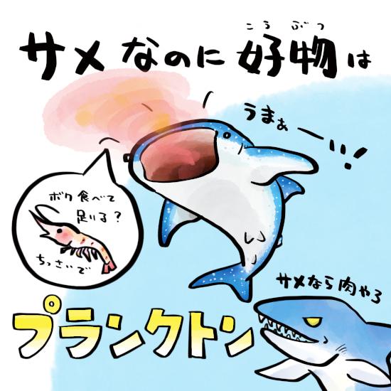 さかなのおにいさん かわちゃん さかな ジンベエザメの好物 ジンベエザメの生態 ジンベエザメ ツッコミたくなるおさかな図鑑