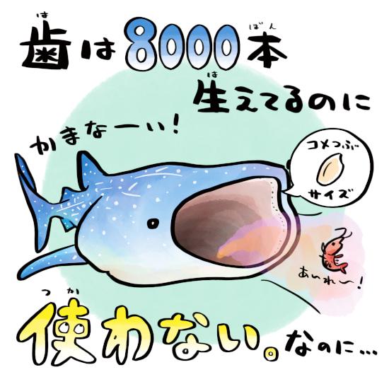 さかなのおにいさん かわちゃん さかな ジンベエザメの歯 ジンベエザメの生態 ジンベエザメ ツッコミたくなるおさかな図鑑