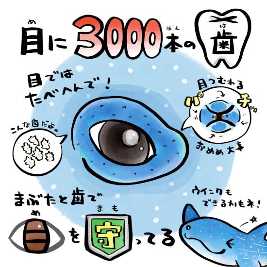 さかなのおにいさん かわちゃん さかな ジンベエザメの歯 ジンベエザメの生態 ジンベエザメの目 ツッコミたくなるおさかな図鑑
