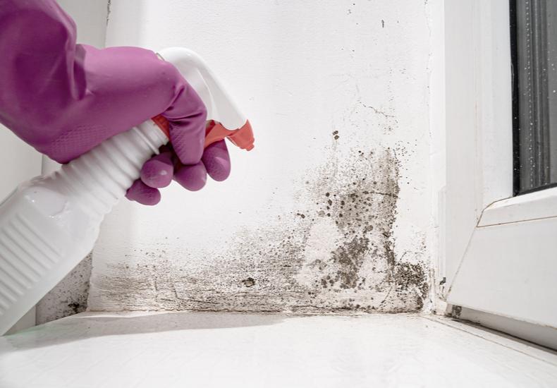 カビ 臭い 対策 掃除 退治 再発防止  予防